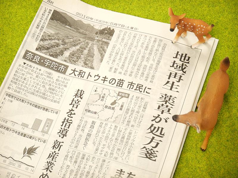 奈良ピックルスの大和トウキ漬けには五條市の大和トウキを使用しています